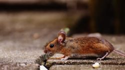 The amazing benefits of getting pest inspection services